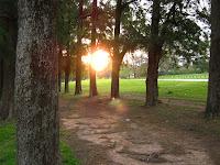 Prado atardecer arboles parque paisaje uruguay