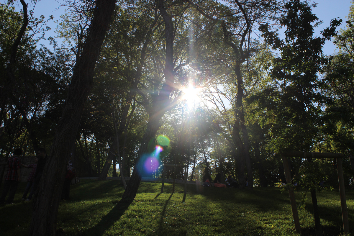 ağaçların arasından güneş ışığı