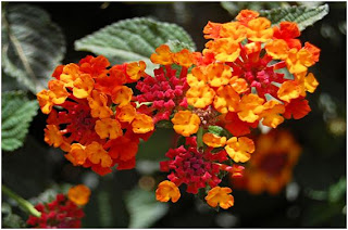 7 Bunga Terindah di Dunia