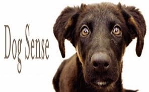Tìm hiểu giác quan trên loài chó.