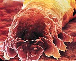 parasito, Nematomorpha, insectos, infecta, controla