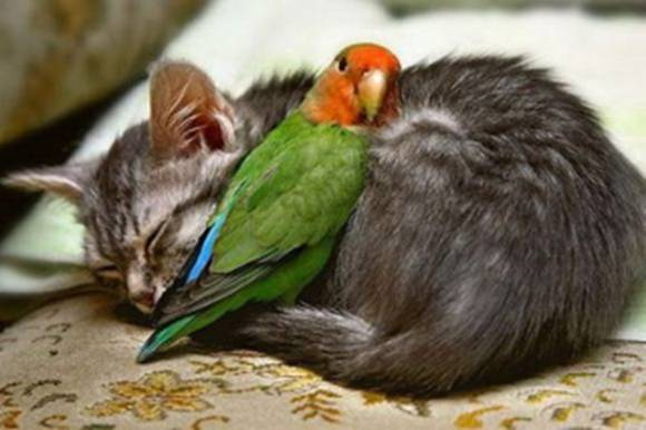 The Real Animal Friendship Photos