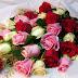 Hermosos fondos de rosas y flores rojas, blancas, moradas, amarillas animadas.