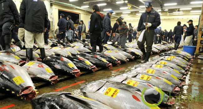 Penjualan Ikan Ilegal