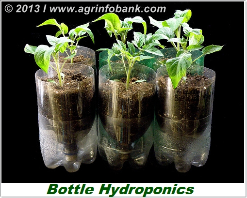Bottle HydroponicsOasis Agro Industries Pakistan