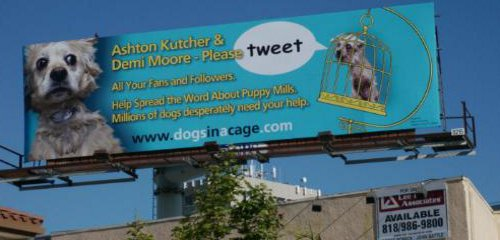 Image of: Meat Animal Welfare Group Asks Demi Moore And Ashton Kutcher To Tweet For Puppy Mill Dogs This Dish Is Veg Animal Welfare Group Asks Demi Moore And Ashton Kutcher To Tweet For