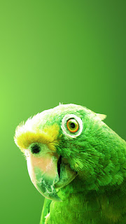 green parrot iPhone 5 hd wallpaper 2013