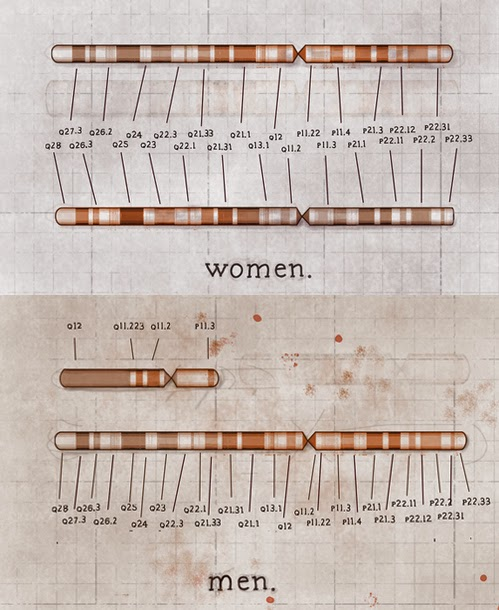 cromosoma x e y