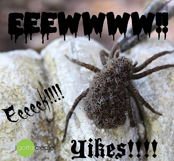 Eewww!  Wolf Spider with babies on her back.  via I Gotta Create!