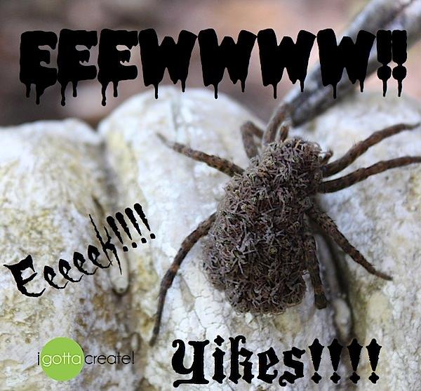 Eewww!  Wolf Spider with babies on her back.  via I Gotta Create!