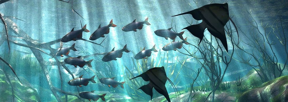 Kion Kashefi's Underwater Photography