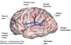 apraxia definition