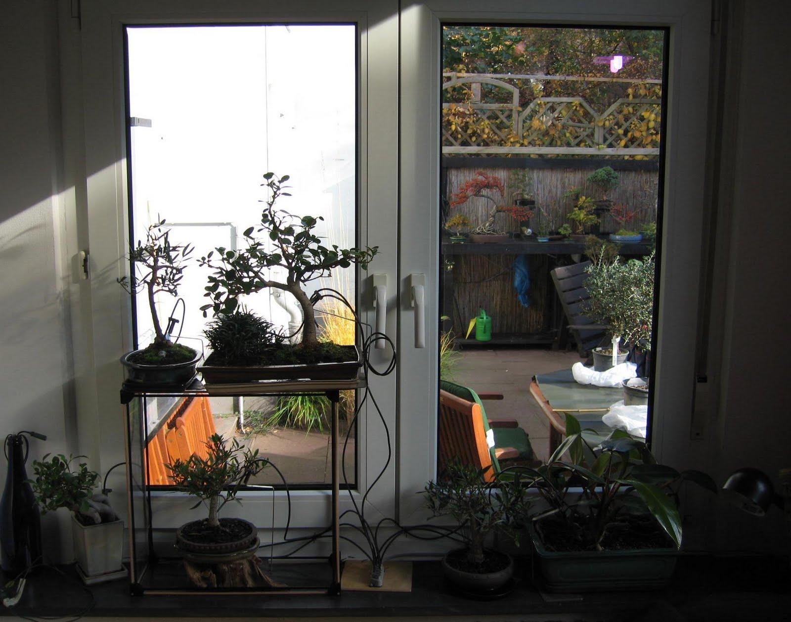 bonsai das sch nste hobby der welt mit bonsai leben indoor is in 2011. Black Bedroom Furniture Sets. Home Design Ideas