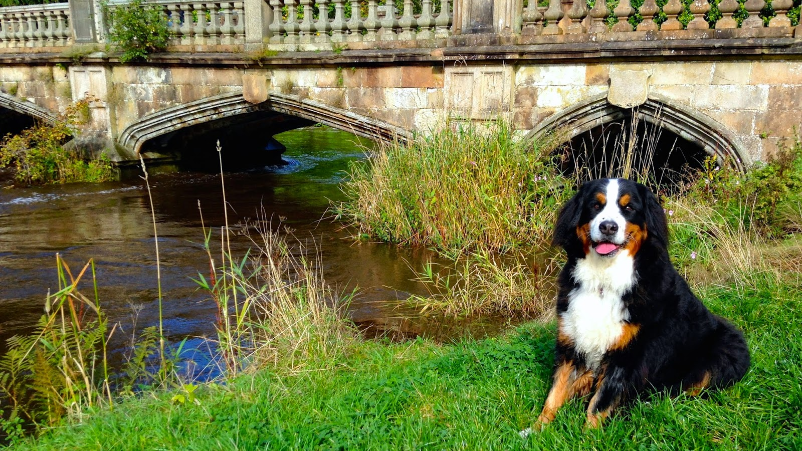 Mattie on the banks of the River Clyde in Glasgow
