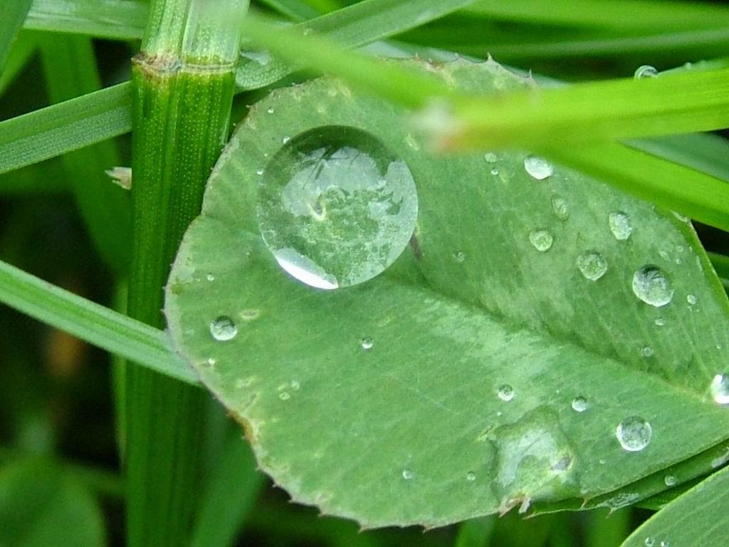 http://4.bp.blogspot.com/-CVhTRfZCxag/Tj3JDyu984I/AAAAAAAAIts/4WhUYXuporQ/s1600/Rain+Wallpapers+%25281%2529.jpg