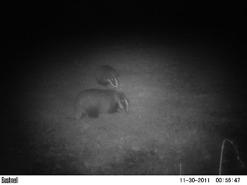 Camera Trap Mammal Photo 5