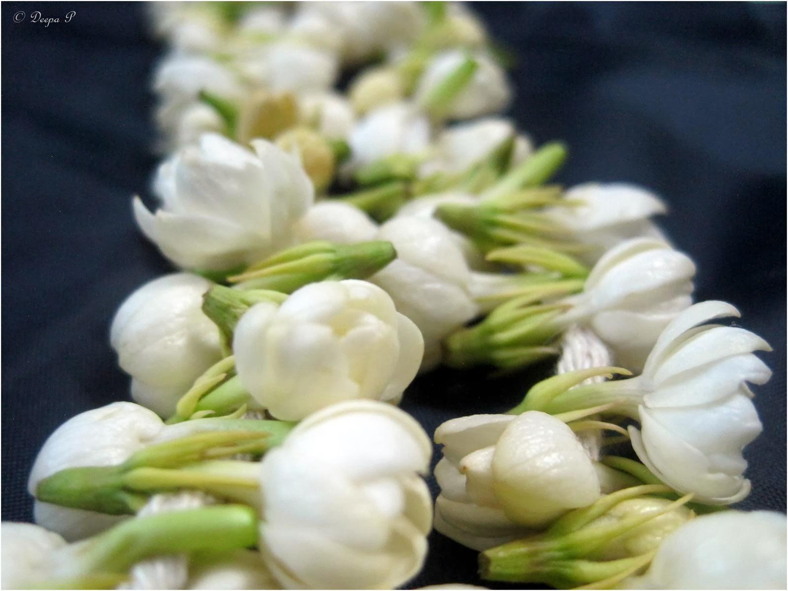A to z challenge j jasminum sambac flower indian jasmine flower a to z challenge j jasminum sambac flower indian jasmine flower izmirmasajfo