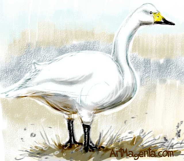 Whooper Swan sketch painting. Bird art drawing by illustrator Artmagenta