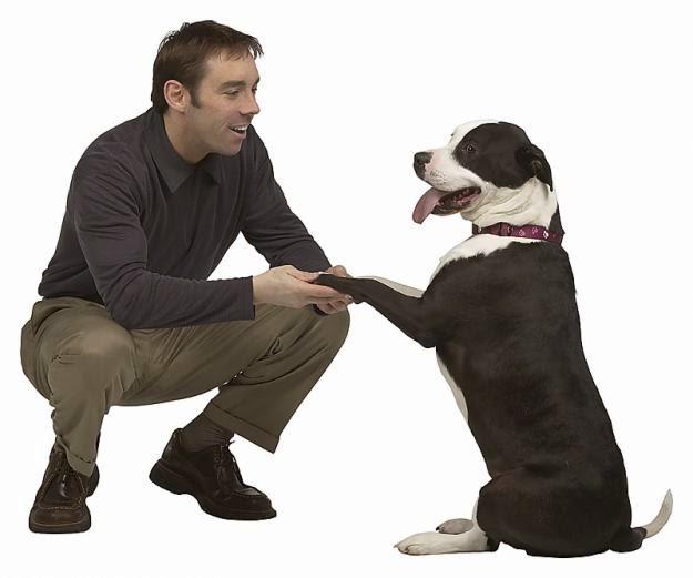 La educación de tu perro