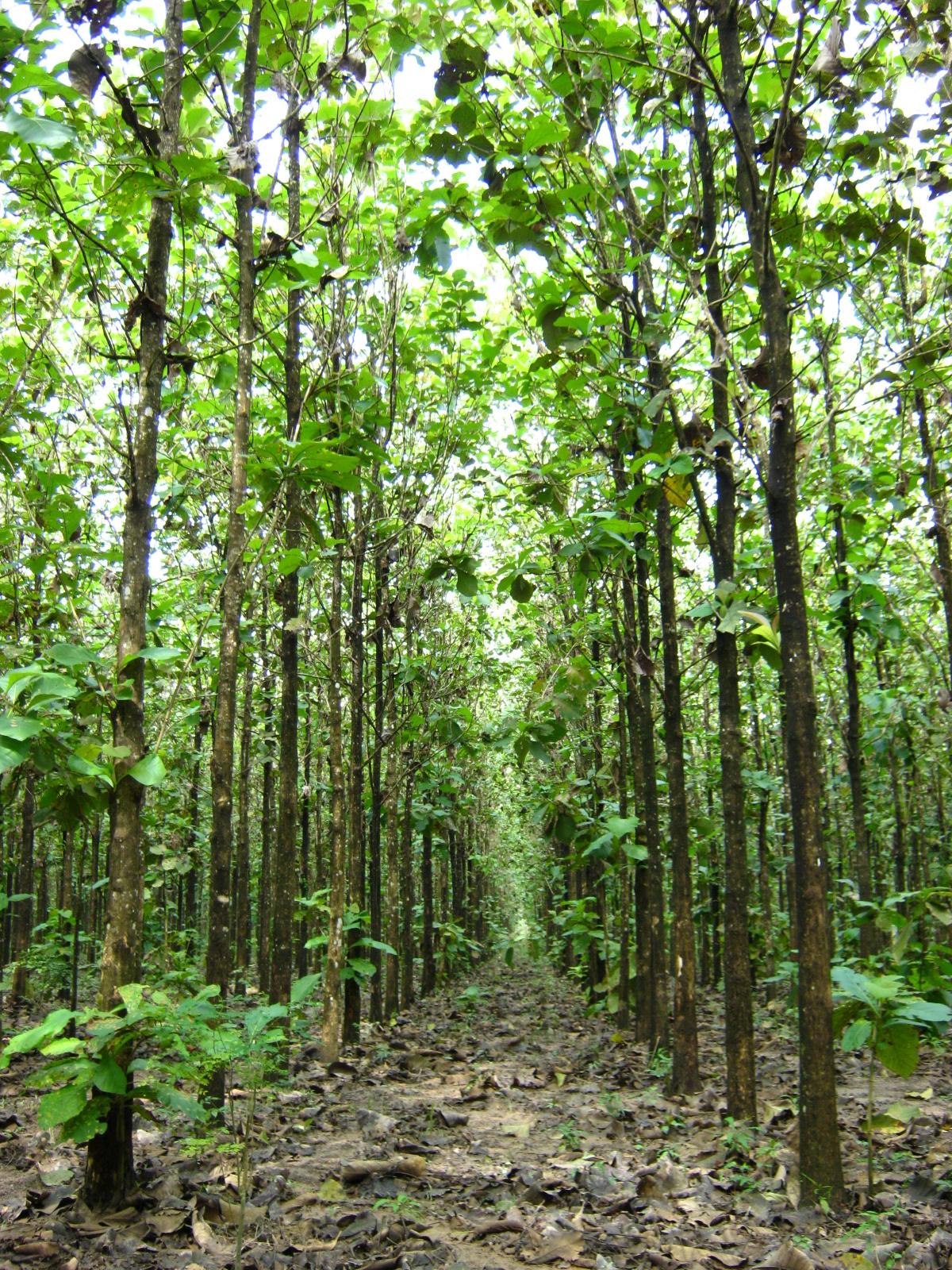 Nutrici n forestal costos nutritivos indicadores for Partes de un vivero forestal