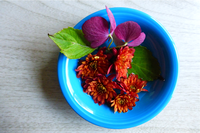 crysanthemum, hydrangea, fiestaware, tabletop flowers, flowers on my table, flowers in a dish