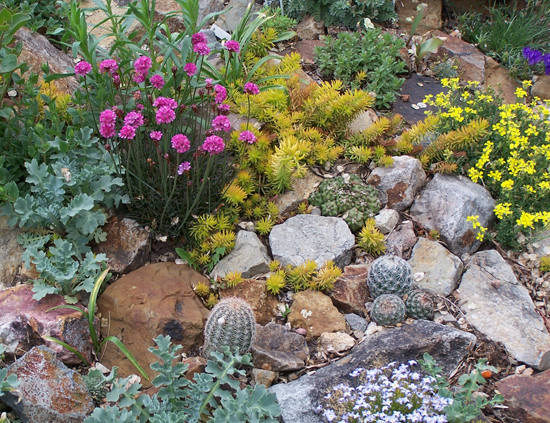 Alternative Eden Exotic Garden Book Review Cacti