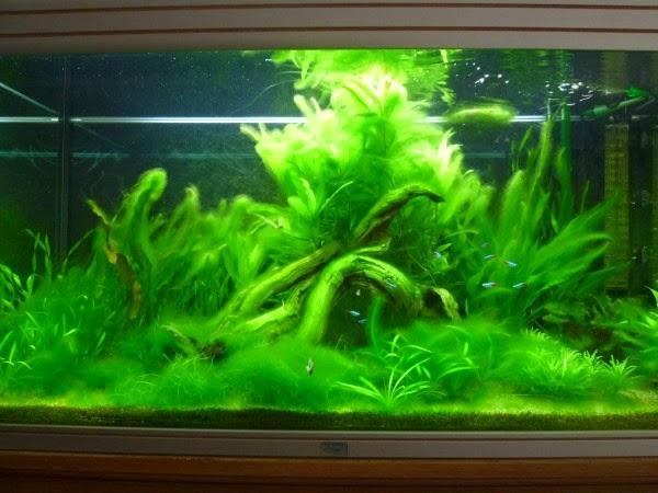 l aquarium de nicolas un an de probl 232 mes