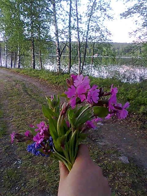 wild flowers,nnorth karelia, finland, lieksa