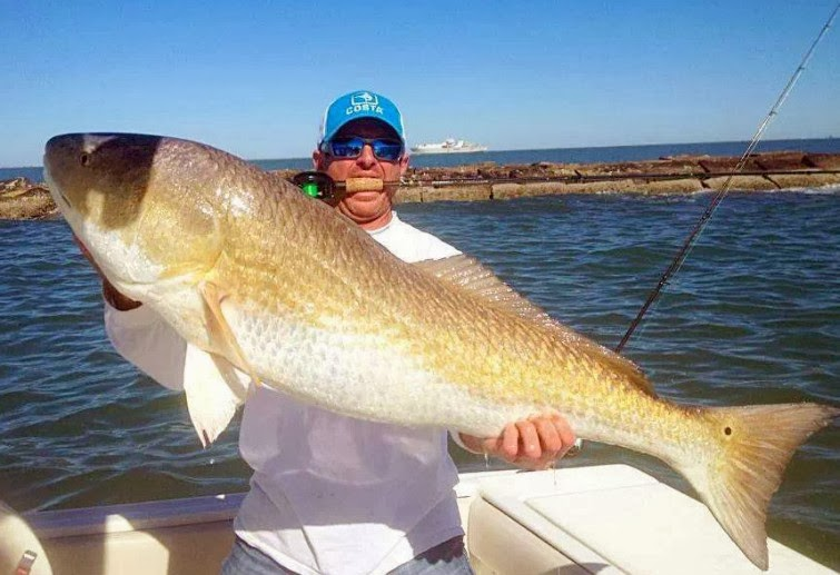 Big fishes of the world drum red redfish sciaenops for How to fish for redfish