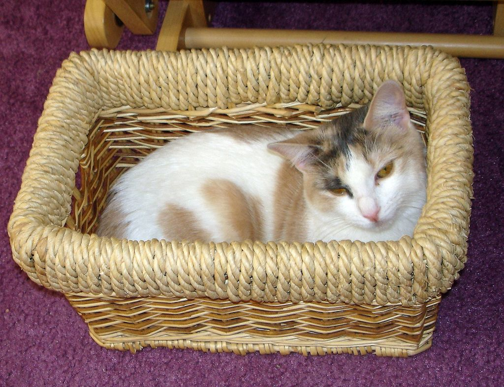 26. our cat sitting in the basket by Violette79