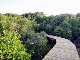 Wisata Mangrove Probolinggo