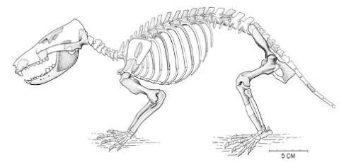 mamiferos del cretaceo Gobiconodon