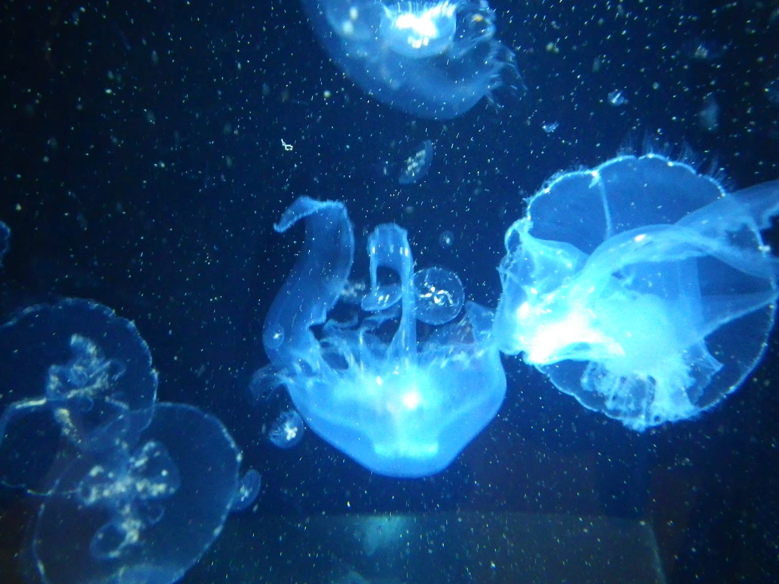 水族館のクラゲの画像