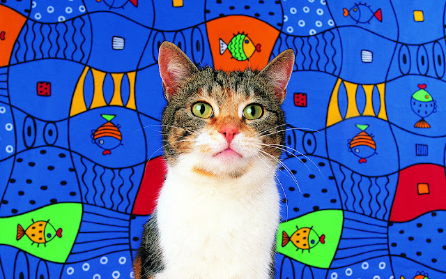 fish background, tabby cat