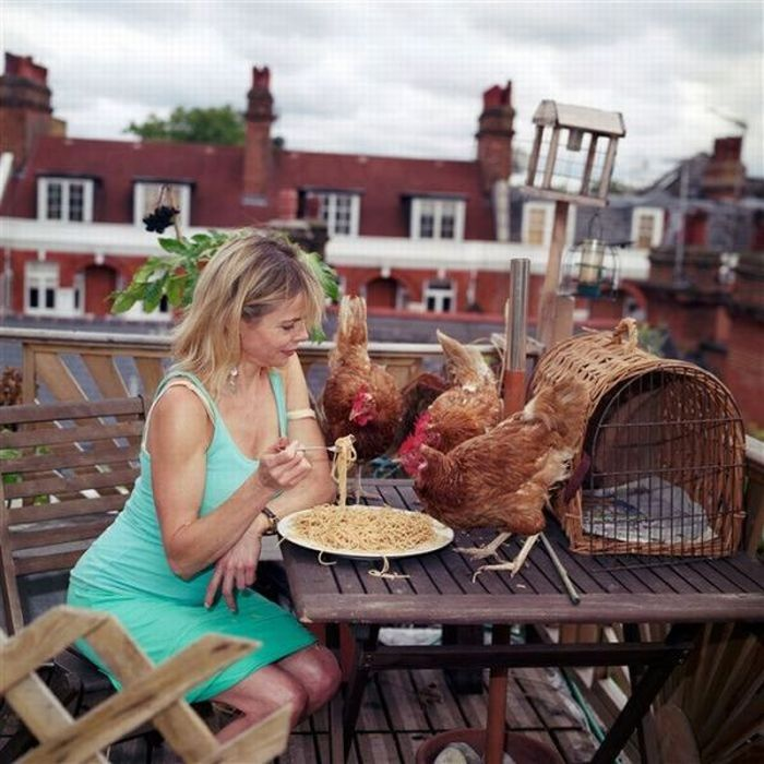Designer Hühnerstall peters hühnerstall