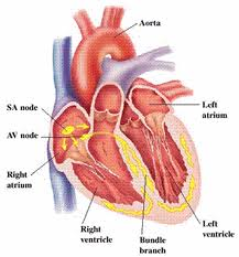 atrial flutter diagnosis and treatment