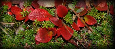 Blader på bakken