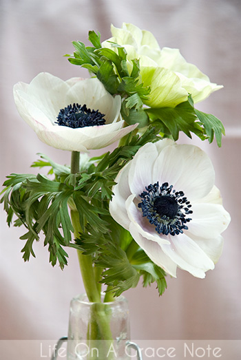 Bleu bird design white anemones the it flower for bridal bouquets white anemones with black centers i love this flower in any color but these are the new it factor for weddings for foreseeable future mightylinksfo