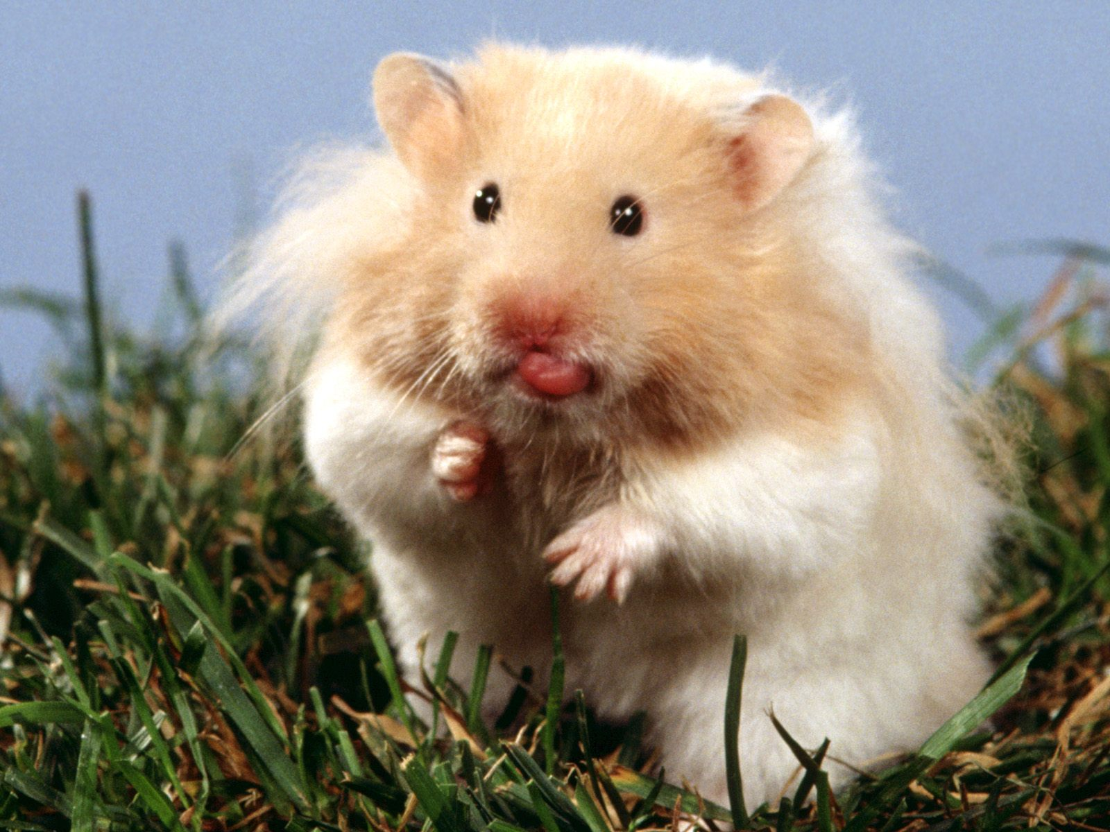 cute hamster wallpaper images pictures becuo
