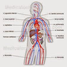 Obat Melancarkan Peredaran Darah