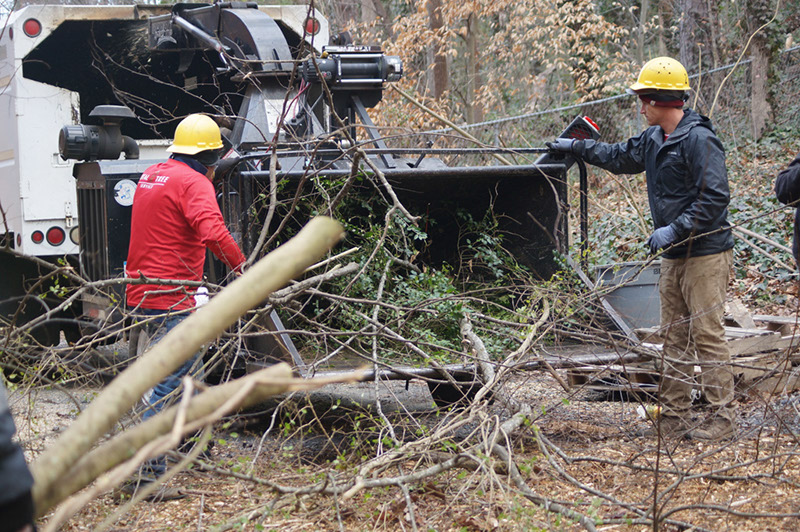 Fast Tree Removal Services Atlanta