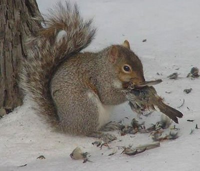 squirrel eating bird