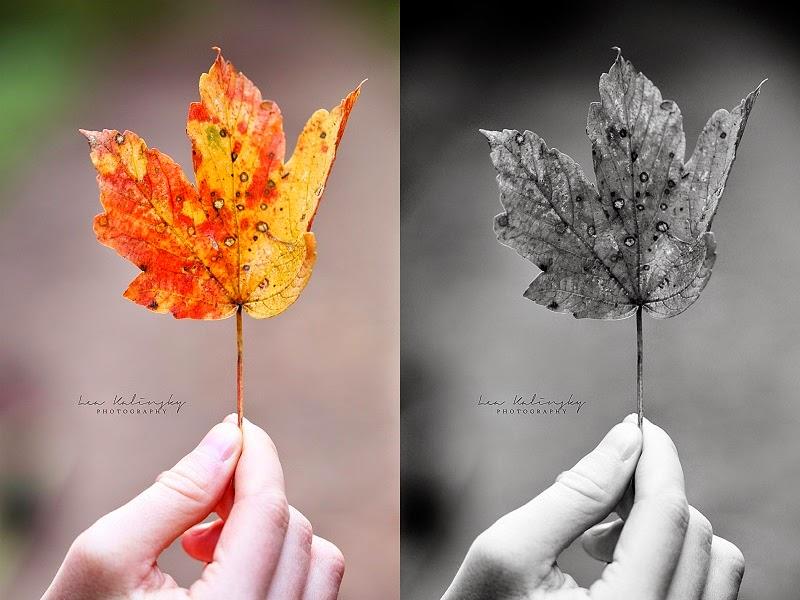 Blatt, Herbst, Lea Kalinsky, Makro