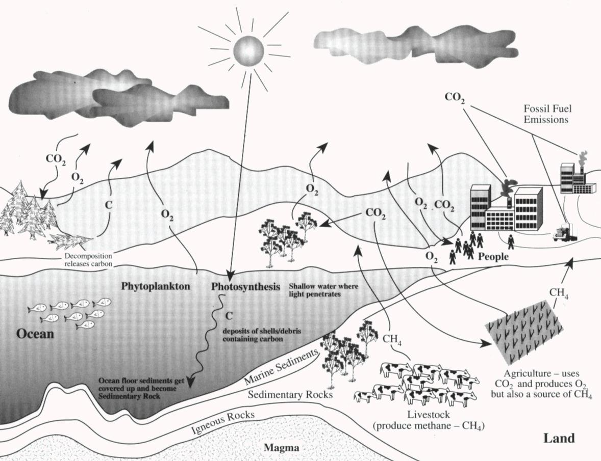 Air pollution dan paul learning journal