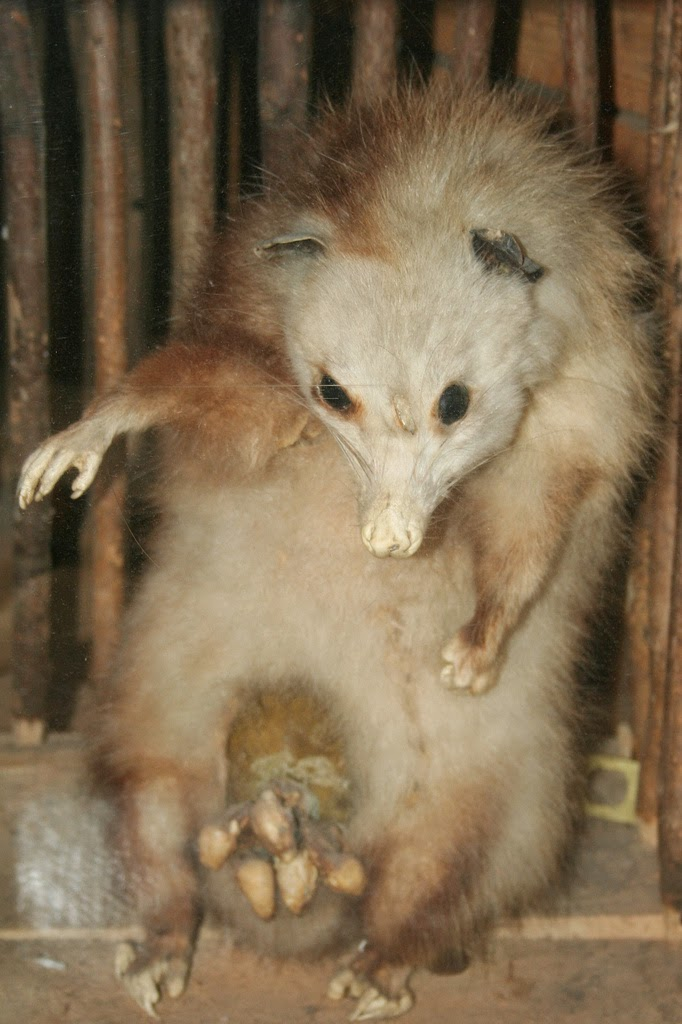 The Carpetbagger Famous Possums Throughout History