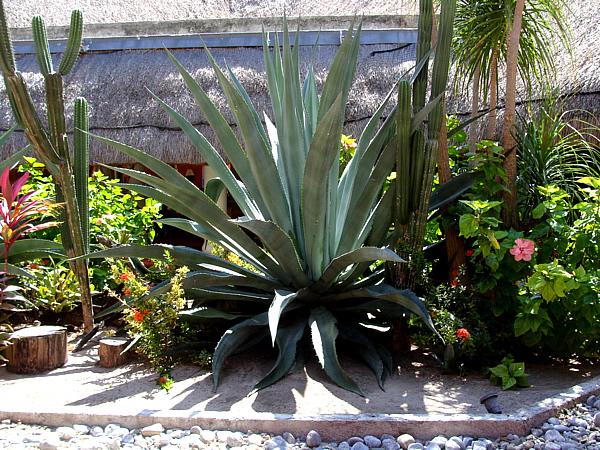 Unique garden ideas with aloe vera for Unique garden ideas