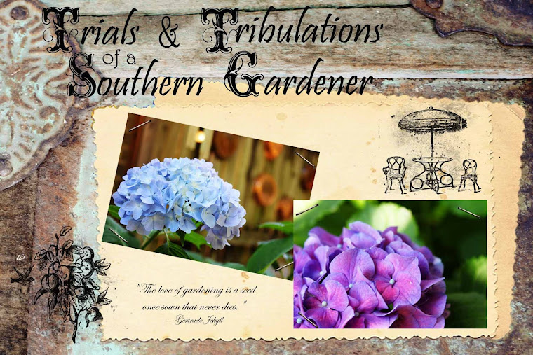 Trials &amp; Tribulations of a Southern Gardener