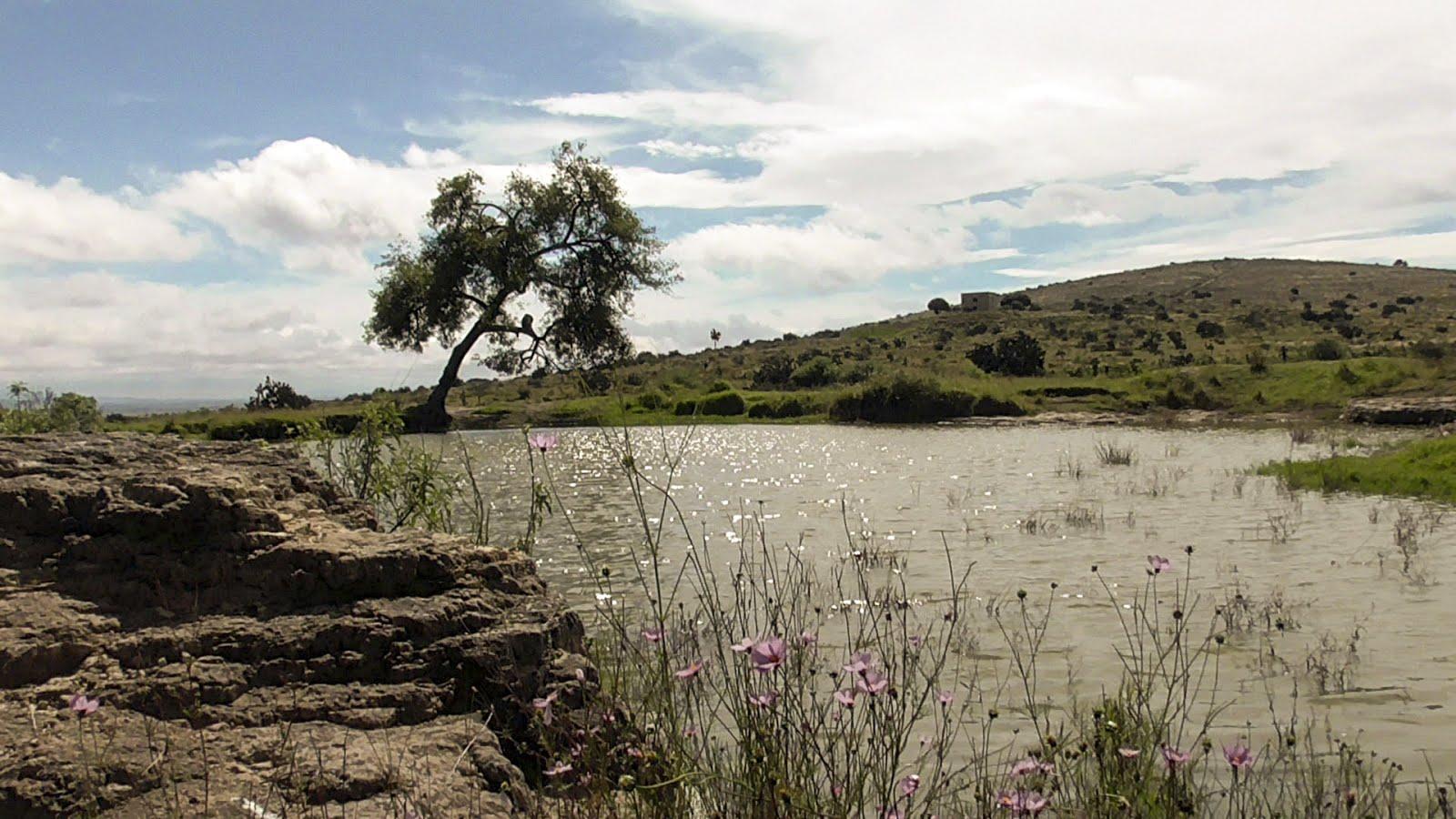 El Jaguey