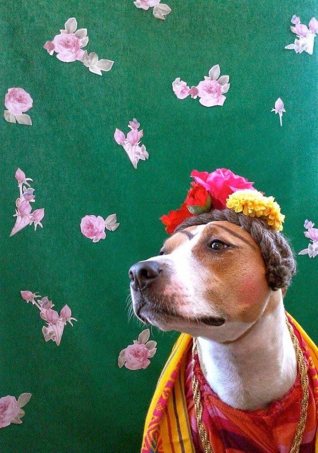 Los 10 Disfraces mas Divertidos para Perros