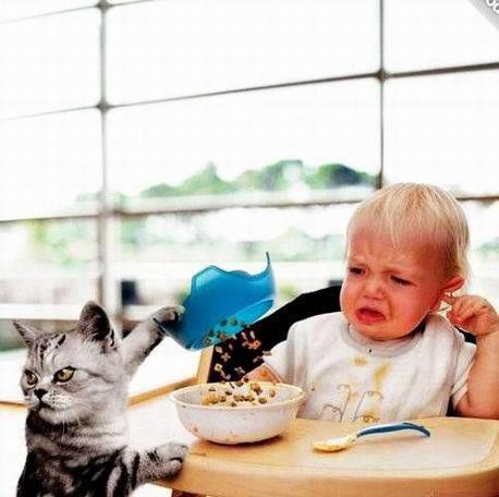 [Image: funny+kid+and+cat.jpg]